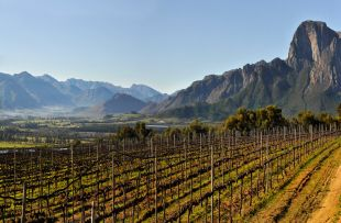 Winelands La Motte FB1