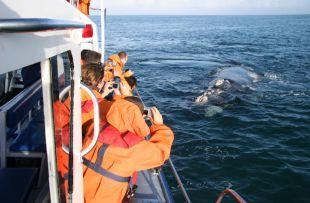 boat whale dyer island web2