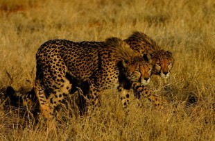 game drive tswalu web4