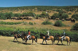 horse safari sanparks web2