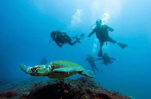 scuba thonga fb3