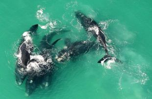whalewatching de hoop collection fb2